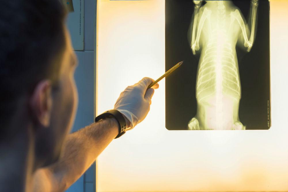 dierenarts ilse bassez radiografie